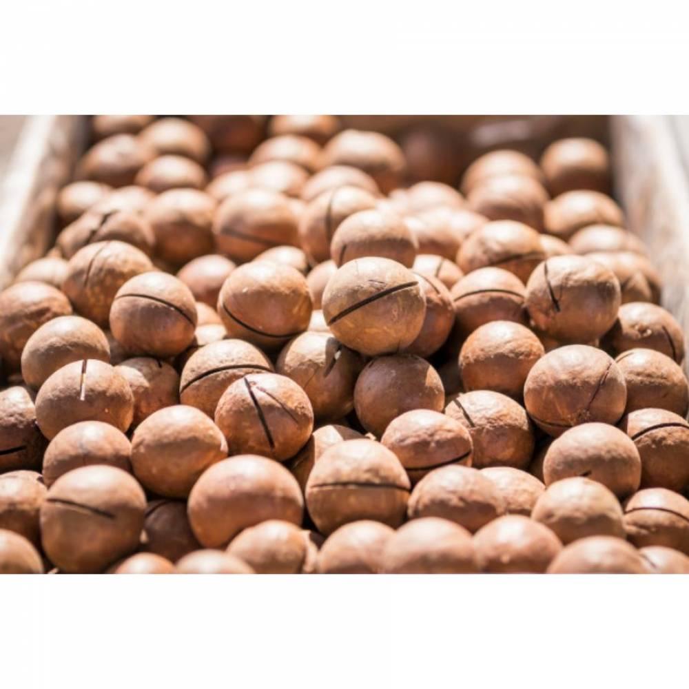 Макадамия в скорлупе Крупная, орехи, 250 гр